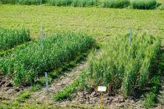 Lethbridge Research Farm