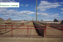 Day 3 Sheep Feedlot